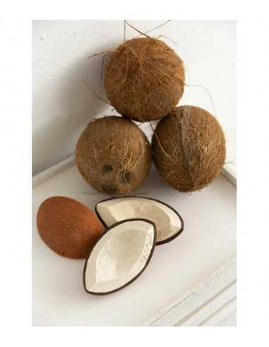 coco-la-noix-de-coco-oli-carol-jouet-hevea-bain-dentition-mes-tendances-bio