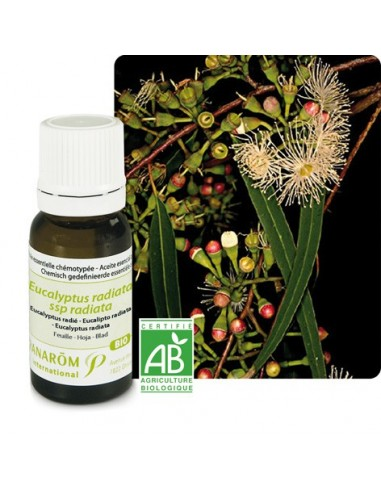 Huile essentielle Eucalyptus Radiata ou Radié BIO PRANAROM